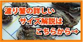 渡り蟹のサイズ解説
