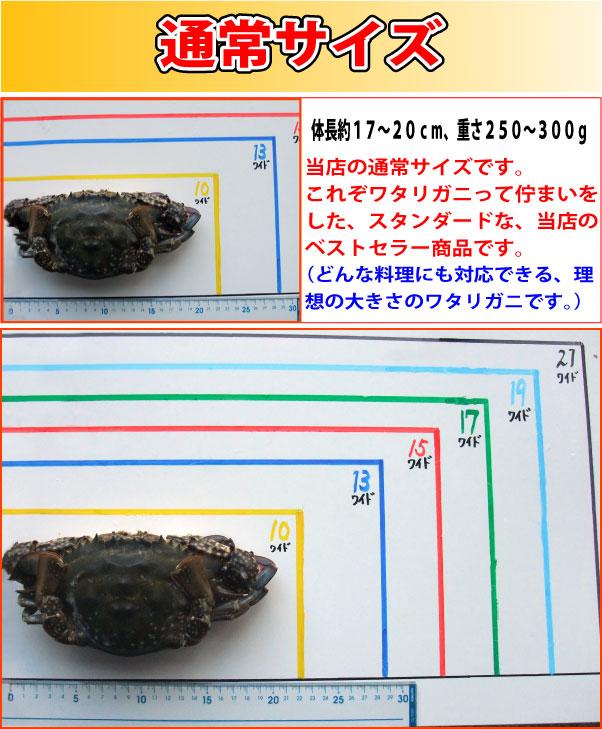 渡り蟹のサイズ解説!